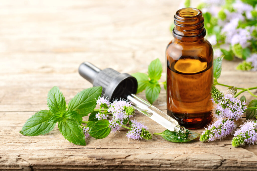 Elder Care in Broomall PA: Peppermint Benefits