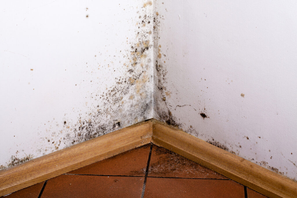 Homecare in Bala Cynwyd PA: Mold Prevention Tips